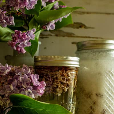 Make Your Own Lilac Sugar and Lilac Syrup